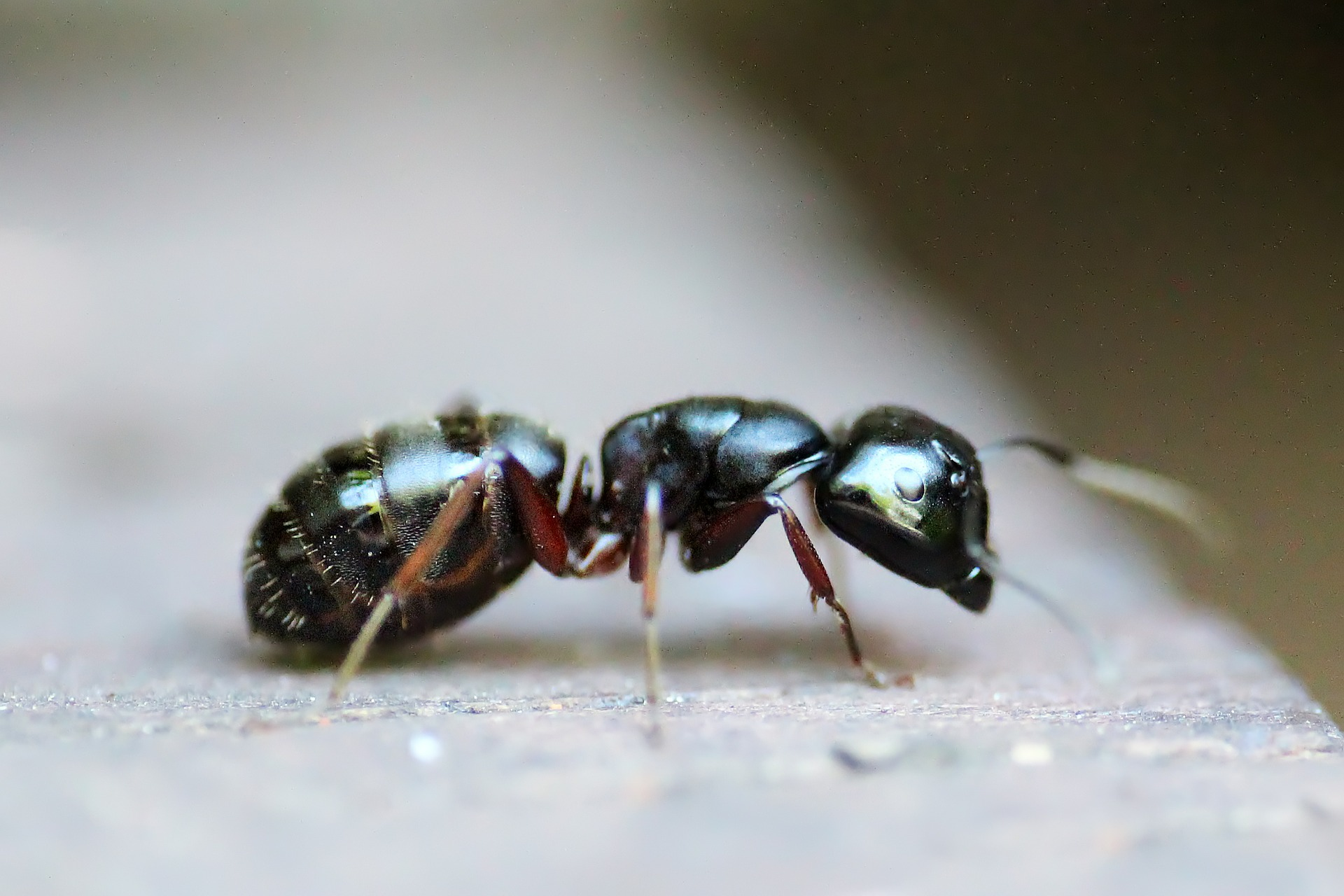 Ants and Termite